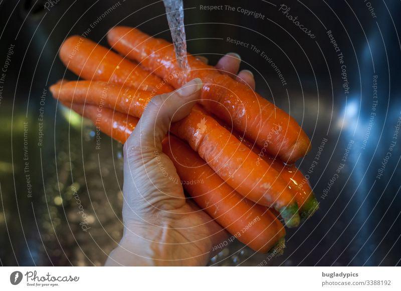 Möhren, die mit ein der Hand unter fließendes Wasser über ein Waschbecken in der Küche gehalten werden Karotten Waschen Reinigen Wasserhahn Bioprodukte