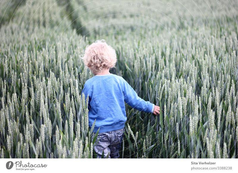 Kleiner Junge im Kornfeld Spielen Sommer Kind Kleinkind Kindheit 1 Mensch 3-8 Jahre Natur Weizenfeld Feld blond Locken berühren entdecken frei natürlich Neugier