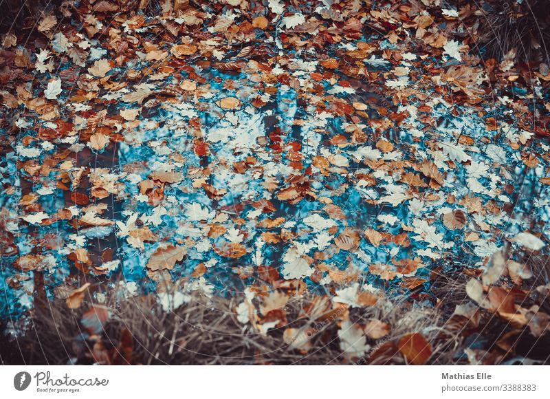 Laub in einer Pfütze Herbst Regen Wasser Reflexion & Spiegelung Straße Blatt Wetter nass Baum Natur Menschenleer Außenaufnahme schlechtes Wetter Umwelt feucht