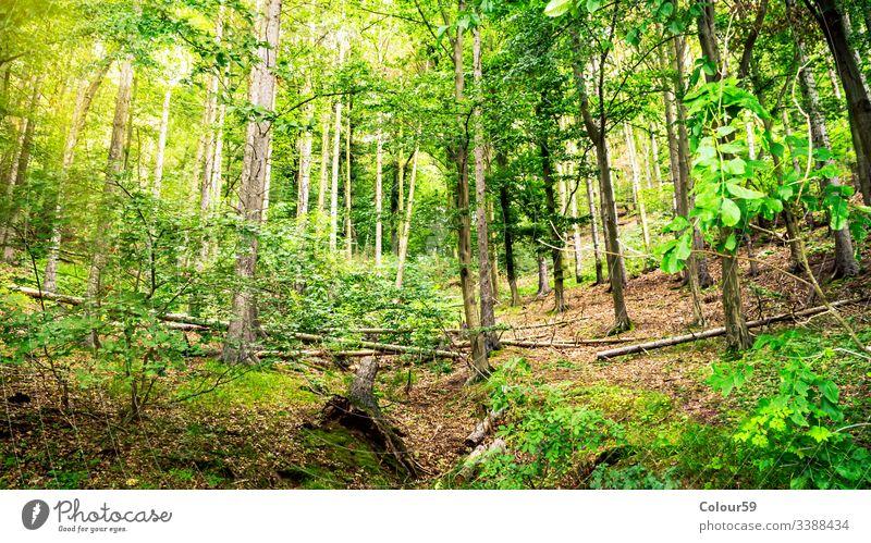 Blick in den grünen Wald Saison Baum Landschaft Sommer Park Natur Umwelt Frühling Ansicht Holz sonnig natürlich Sonnenlicht frisch malerisch im Freien Szene