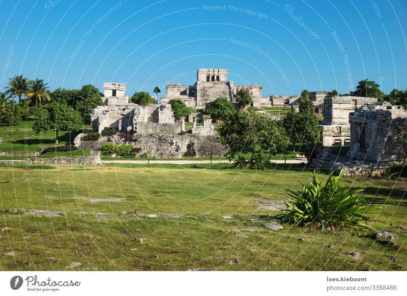 El Castillo bei den Maya-Ruinen mit tropischen Pflanzen, Tulum, Mexiko antik Karibik Kultur alt Yucatan Stein Tempel Zivilisation mexikanisch reisen Wahrzeichen
