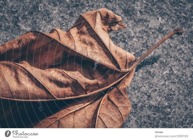 Herbstlaub Blatt Ahornblatt Winter Farbfoto Pflanze Menschenleer Tag Umwelt Außenaufnahme Baum Natur Detailaufnahme herbstlich Herbstfärbung