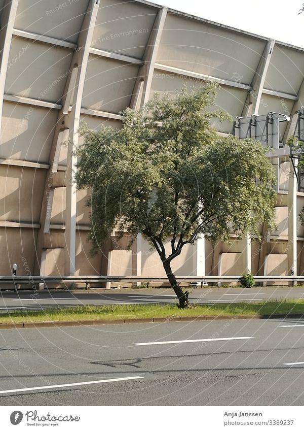 Eine Baum-Lärmschutzwand im Hintergrund Baumrinde grün Pflanze Wand grau weiß beige Straße Sonnenschein