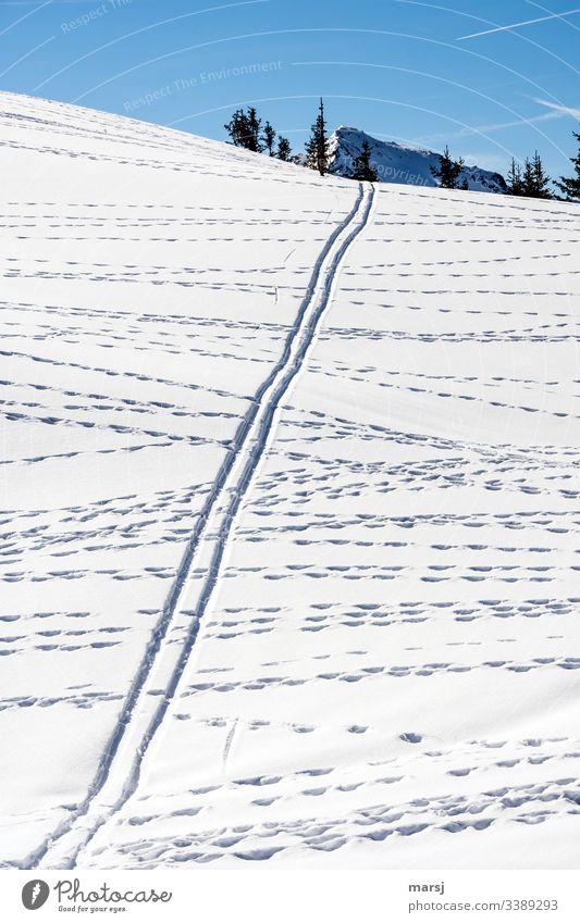 Wildspuren kreuzen eine Skispur im Schnee Schneelandschaft parallel Schneebedeckte Gipfel durcheinander Blauer Hintergrund Blauer Himmel Wintersport Skifahren