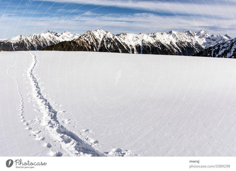 Schneespuren in einem jungfräulich reinen und unberührten Schneefeld in den Bergen Wintertag Kontrast einzigartig Schneelandschaft Wintersport Blauer Himmel