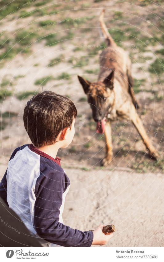 Junge spielt, indem er einen Stock auf seinen Hund wirft Spiele Hunde Kind belgien Schäfer Gefahr Tier Haustier zwei 4s 5s Kinder Hinterhof im Freien Frühling