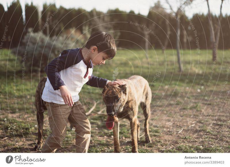 Kind streichelt freundlich seinen Hund Junge Spiele Hunde belgien Schäfer Gefahr Tier Haustier zwei 4s 5s Kinder Hinterhof im Freien Frühling Lebensstile