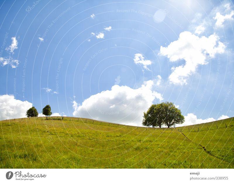 Sinuskurve Umwelt Natur Landschaft Pflanze Himmel Sonnenlicht Frühling Sommer Schönes Wetter Baum Sträucher Wiese Feld natürlich blau grün Farbfoto