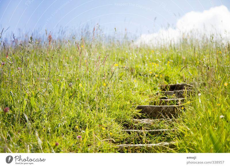 Weg zum Sommer Himmel Natur grün Landschaft Umwelt Gras Frühling natürlich Feld Treppe