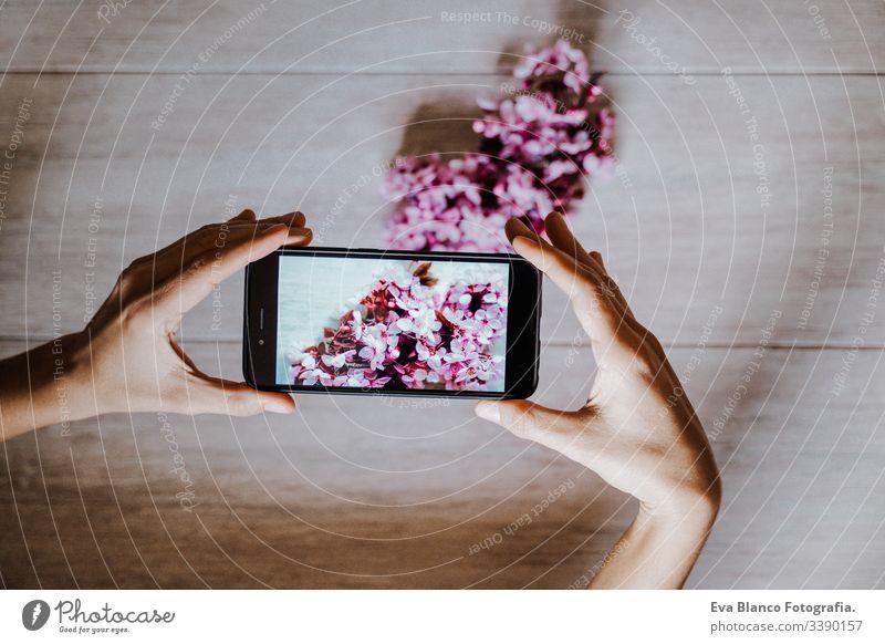 Frau, die im Haus ein Foto von schönen rosa Mandelbaumblüten macht. Technik und Frühlingskonzept Handy Technik & Technologie Bild Fotokamera Bildschirm Blumen