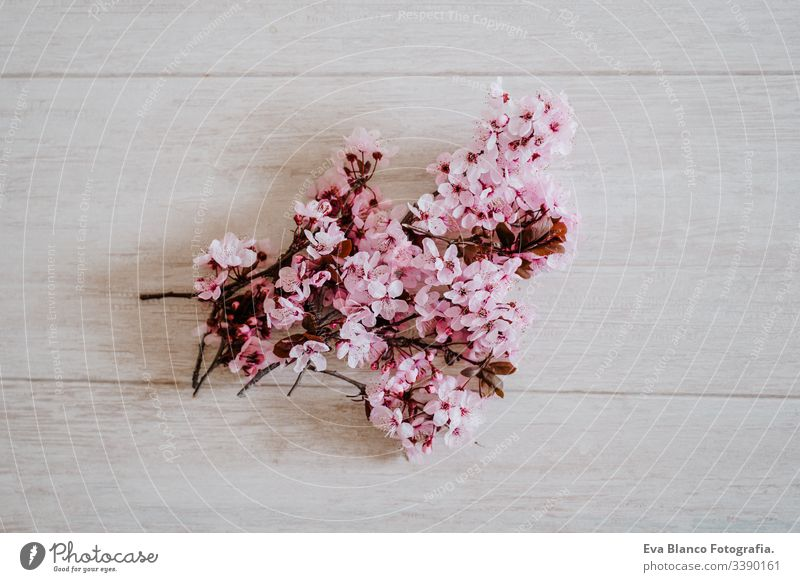 Frühlingsbordüre oder Hintergrundkunst mit rosa Blüte. Wunderschöne Naturszene mit Mandelbaumblüten im Innenbereich. Frühling Blumen Überstrahlung Blumenstrauß