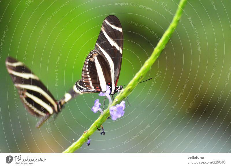 Leise, zarte Klänge. Natur Pflanze Tier Sonnenlicht Frühling Sommer Schönes Wetter Blume Gras Sträucher Wildpflanze Wildtier Schmetterling Tiergesicht Flügel 2