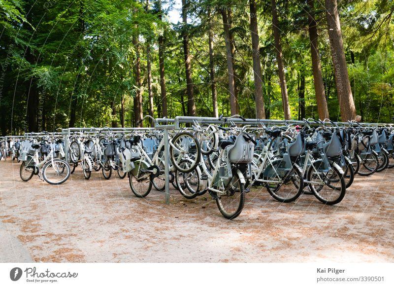 Dutzende von Fahrrädern sind im niederländischen Nationalpark De Hoge Veluwe geparkt aktiv Fahrrad Radfahren Zyklus Tag de hoge veluwe holländisch Europa Wald