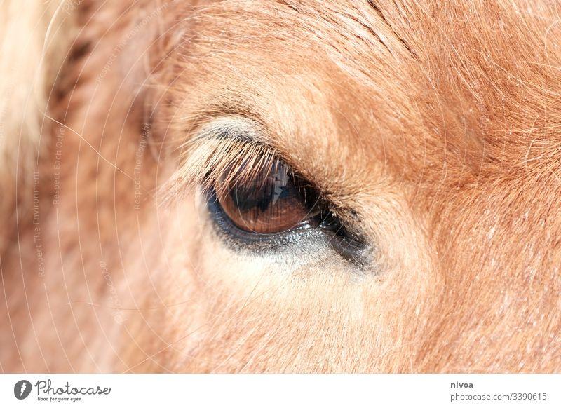 Pferdeauge Island Ponys Detailaufnahme Auge Tierauge Farbfoto Außenaufnahme Tag Tierporträt Nutztier Natur Wildtier Mähne Menschenleer ästhetisch wild natürlich