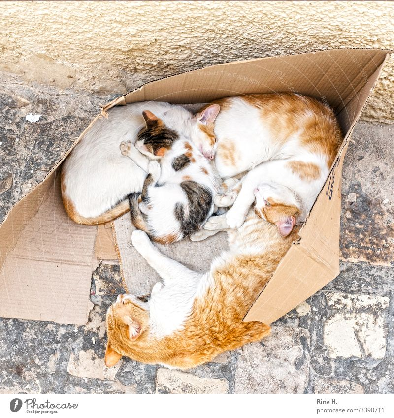 Katzenfamilie ( Hartz IV) kuscheln Katzenbaby zuhause arm draussen fussweg Haustier heimisch niedlich