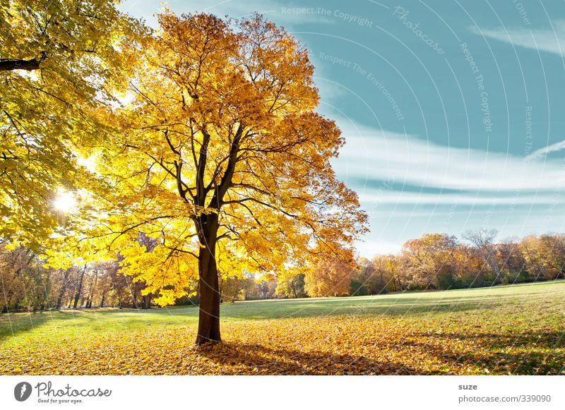 Söhnlein Brillant Umwelt Natur Landschaft Pflanze Himmel Herbst Klima Wetter Schönes Wetter Baum Park Wiese außergewöhnlich Freundlichkeit schön blau gelb gold
