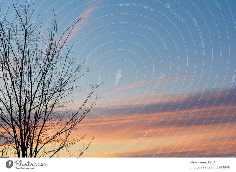 Baumsilhouette verzweigt sich im Vordergrund mit schönen frühmorgendlichen Wolken am Himmel Pastellfarben orange Niederlassungen Silhouette strömen Antenne