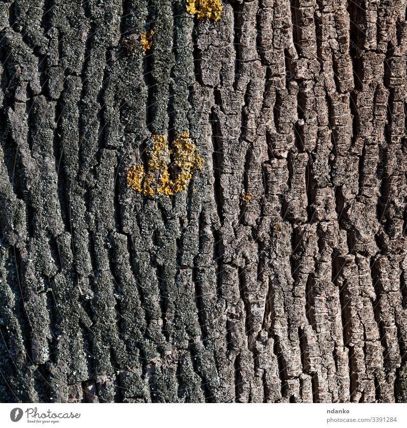Graue Eichenrinde Textur Vollrahmen, Element für Designer Rinde Baum Natur Holz Hintergrund natürlich braun Muster Kofferraum Wald alt hölzern Pflanze abstrakt