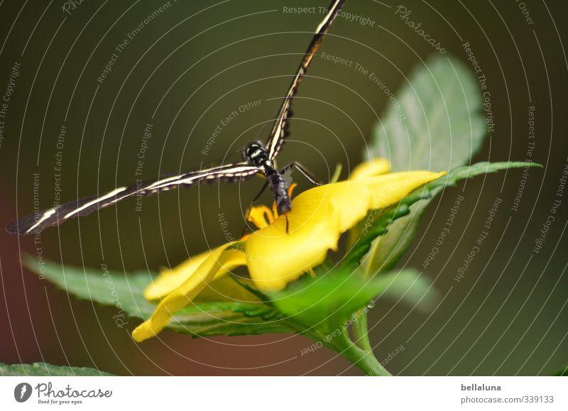 Anmut Natur schön grün Pflanze Blume Tier Blatt gelb Wiese Gras Blüte natürlich außergewöhnlich Garten Park fliegen