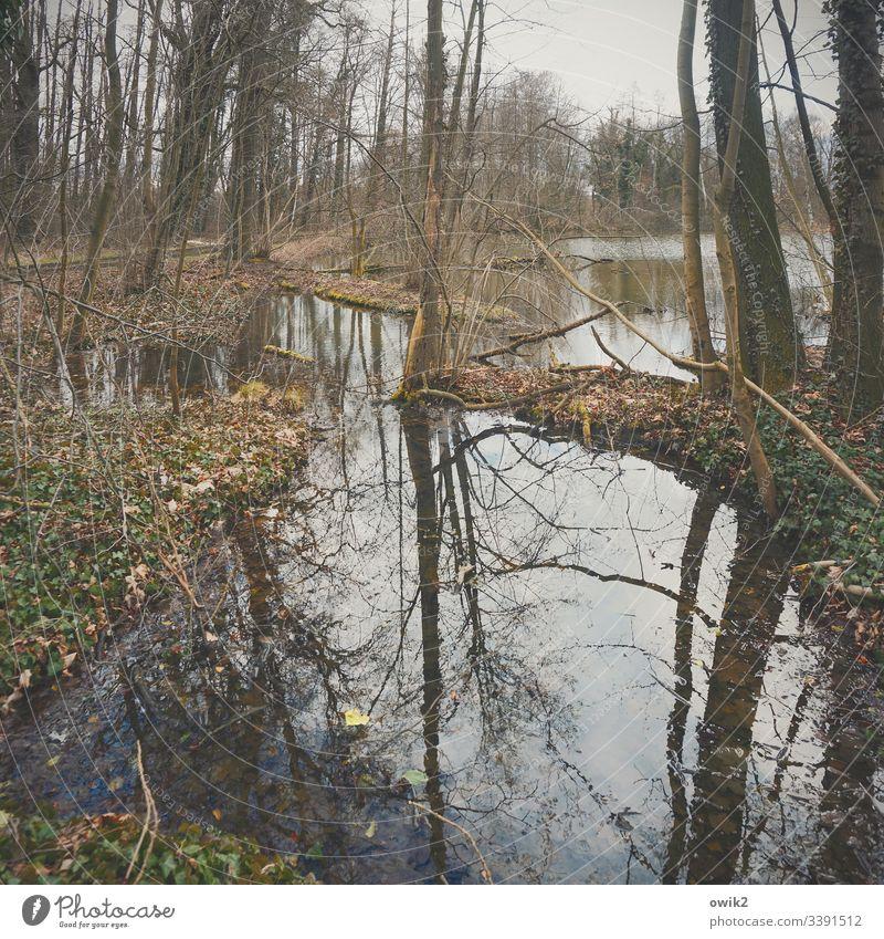Alter Weiher Natur Wasser draußen Teich Bäume Außenaufnahme Menschenleer Farbfoto Pflanze Himmel Umwelt Wald Reflexion & Spiegelung Licht Seeufer Sträucher