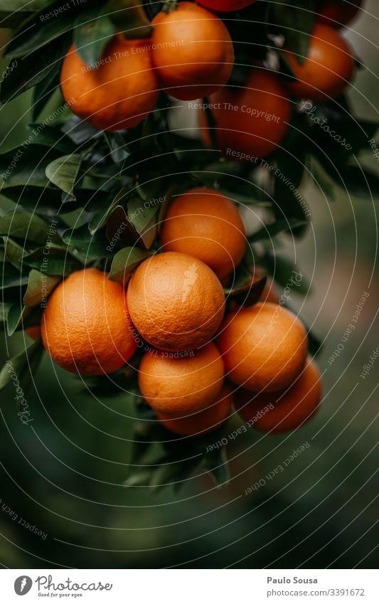 Nahaufnahme von Orangen in einem Baum orange Frucht Orangensaft Vitamin Gesundheit Vitamin C Farbfoto Ernährung Zitrusfrüchte Gesunde Ernährung Getränk