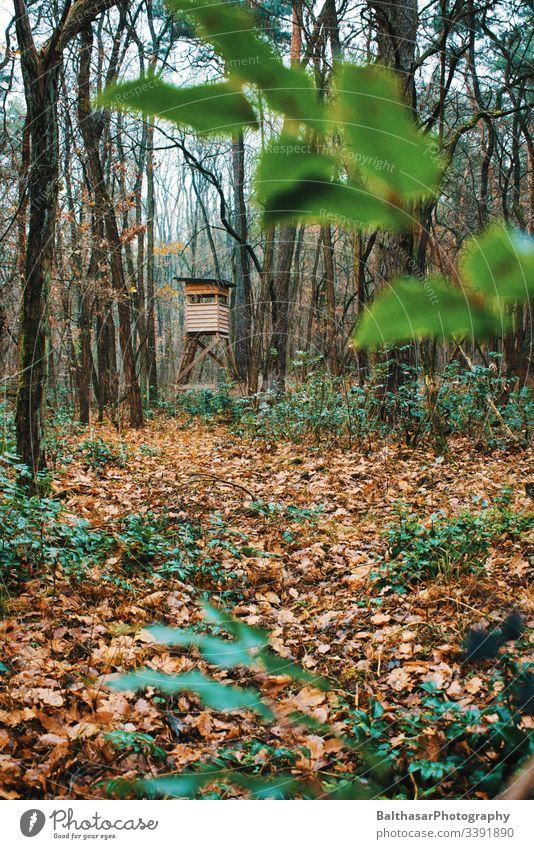 Hochsitz im Wald (stimmungsvoll) Nebel herbstlich Herbst Laubwald laub Pflanzen feucht Farbe Blätter Umwelt Natur Freiheit Atmosphäre kühl und feucht romantisch