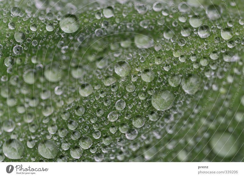 Tropfenlandschaft Umwelt Natur Wetter Regen Blatt grau grün viele Wassertropfen Farbfoto Außenaufnahme Nahaufnahme Makroaufnahme Strukturen & Formen