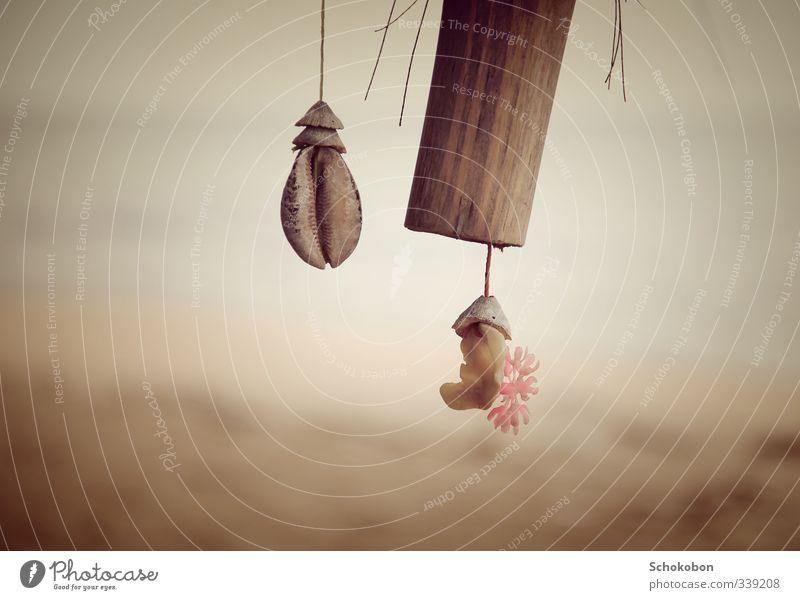 shell Ferien & Urlaub & Reisen Meer Strand Umwelt Gefühle Küste Holz Sand natürlich träumen Kunst Dekoration & Verzierung ästhetisch beobachten berühren