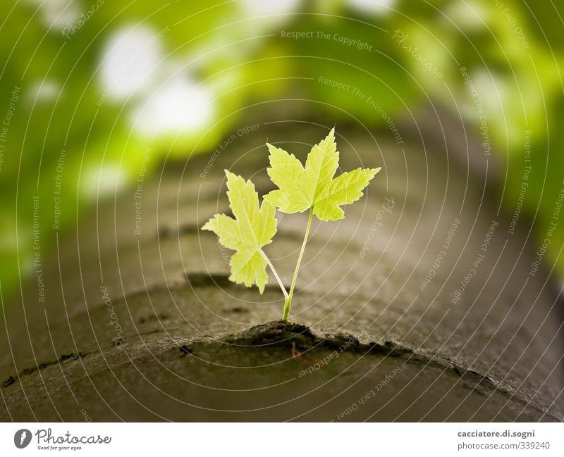 two of us Natur grün schön Pflanze Baum Blatt Wald Gefühle Frühling klein hell natürlich Freundschaft Zusammensein Wachstum Schönes Wetter
