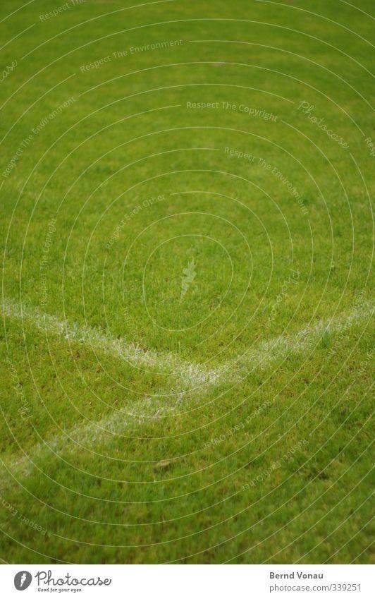 Strafraum Spielen Fußball Fußballplatz Sportplatz Sportrasen Gras Blick frisch grün weiß ruhig Verbindung Farbfoto Außenaufnahme Textfreiraum oben