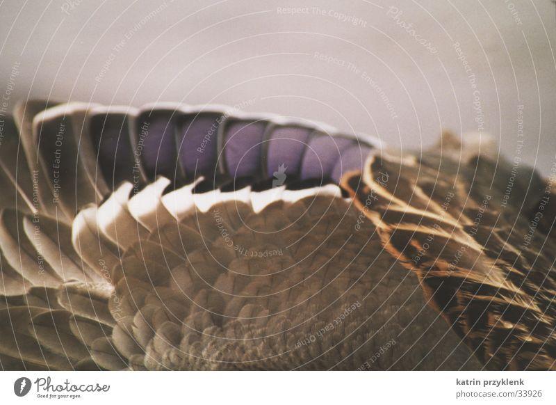 Entenflügel Wasser Tier See nass Feder Flügel Teich Stockente