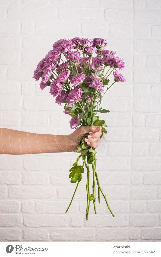 Frau mit einem Chrysanthemenstrauß in der Hand arome Hintergrund schön Blütezeit blau Farbe farbenfroh Gänseblümchen Tag Dekor Flora geblümt Blume geben grün