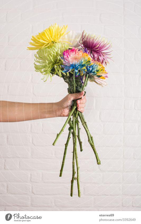 Frau, die einen Blumenstrauß in verschiedenen Farben hält arome Hintergrund schön Blütezeit blau Chrysantheme farbenfroh Gänseblümchen Tag Dekor Flora geblümt