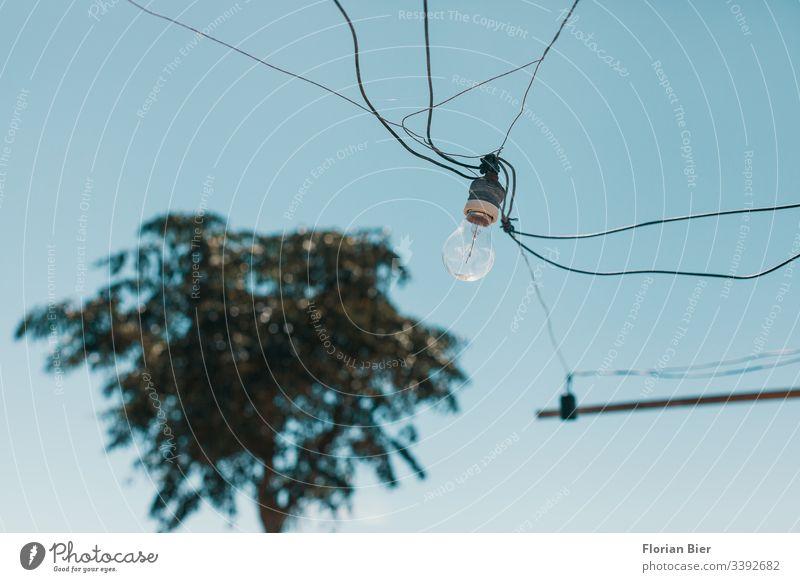 Wild angeschlossene Glühbirne mit Kabelnetz in einer Fassung  vor einer Palme Leuchtmittel retro Verbindungstechnik Strom Licht Edison Netz Anschluss Technik