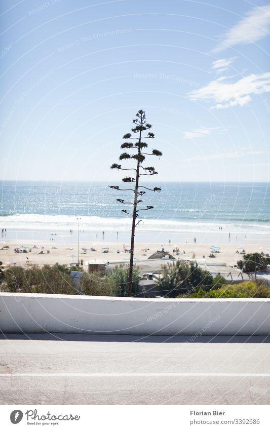 Küstenstraße mit Blick aufs Meer und mediterraner Fauna inspirierend reisen Auszeit südländisch Surfen perfekt malerisch Umwelt Lebensqualität Sommerurlaub