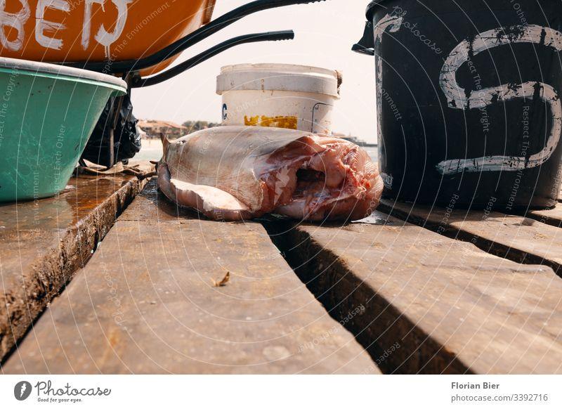 Frischer Fischfang direkt am Steg zum Kauf angeboten Fang Markt frisch Meer Fischer Beruf Leben Lebensmittel Ernährung Fischereiwirtschaft Gesunde Ernährung