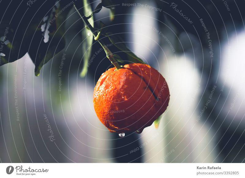 Frische Mandarine Frucht Farbfoto Lebensmittel Ernährung Gesunde Ernährung Gesundheit Vegetarische Ernährung Bioprodukte frisch lecker Menschenleer Vitamin