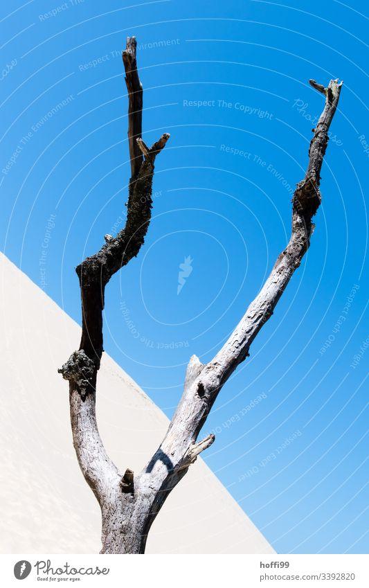 vertrockneter Baum in Wüste Dürre dürreperiode Wüstenpflanze Sand Sanddünen Blauer Himmel Sandverwehung Sandhaufen Diagonale Diagonale Linien minimalistisch
