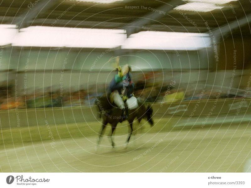 -> volti Sport Bewegung Pferd Reitsport voltigieren
