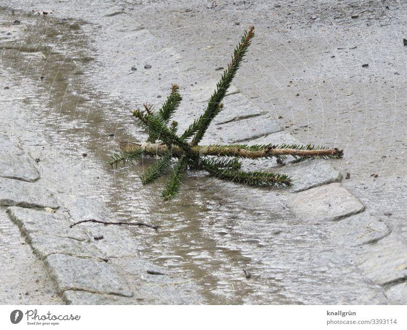 Tannenspitze in einem Tiergehege im Matsch liegend Tannenbaum Weihnachtsbaumspitze alt Menschenleer Winter Außenaufnahme Baum Farbfoto matschig