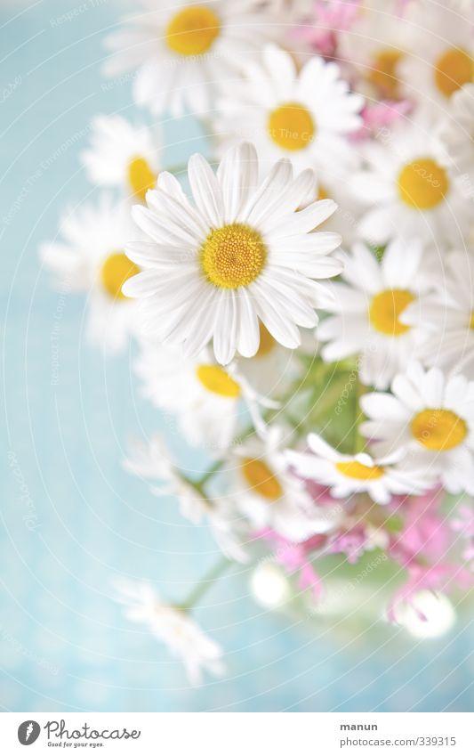 für's Gemüt Dekoration & Verzierung Natur Frühling Sommer Blume Blüte Wildpflanze Margerite Blumenstrauß Wiesenblume hell schön natürlich positiv Leichtigkeit