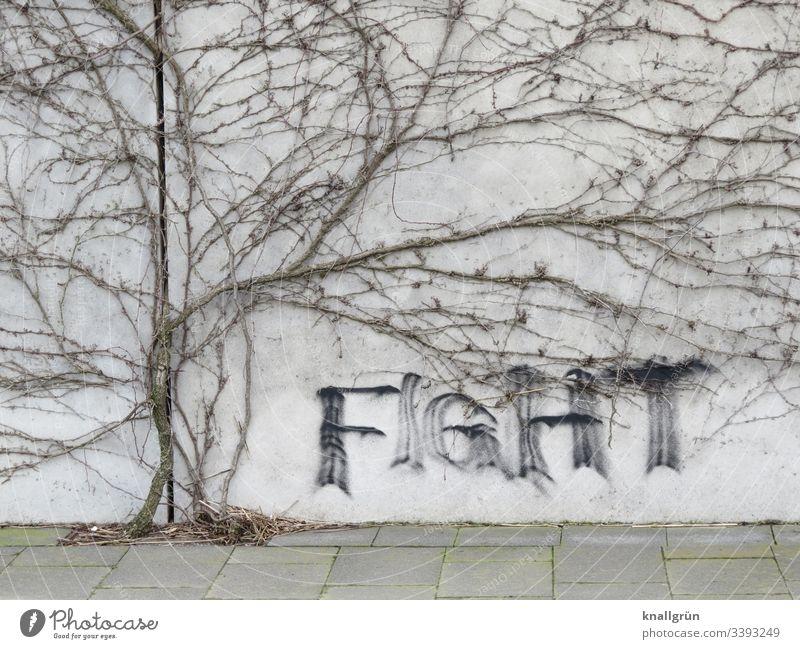 Graffiti an Wand umrahmt von einer vertrockneten Kletterpflanze Schrift kommunizieren Wort Buchstaben Kletterpflanzen Gehwegplatten fight Schriftzeichen