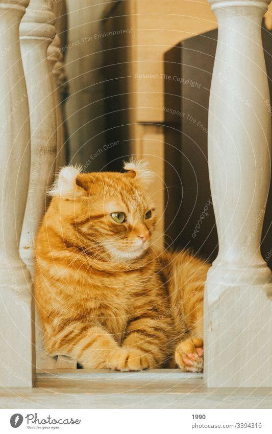 Orangene Katzenkühlung Haustier Tierporträt Hauskatze Katzenauge Katzenfreund sich[Akk] entspannen Erholung orange orange Katze Katzenbaby Kätzchen Katze