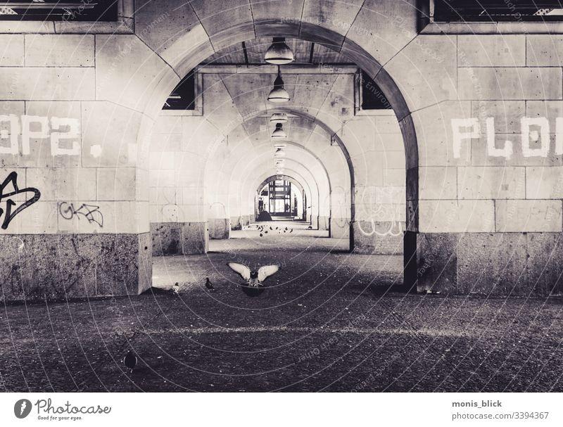 Unterführung Taube fliegen Außenaufnahme Vogel Feder Schnabel Freiheit Flügel landung Luftverkehr weiß underground Tunnel