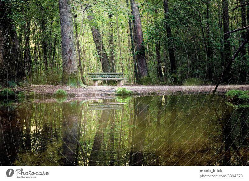 Wald Park Sitzbank Baum grün Natur Blatt Licht Baumstamm Baumrinde Ast Einsamkeit Ruhe Stille Sitzen Bank Alleinsein