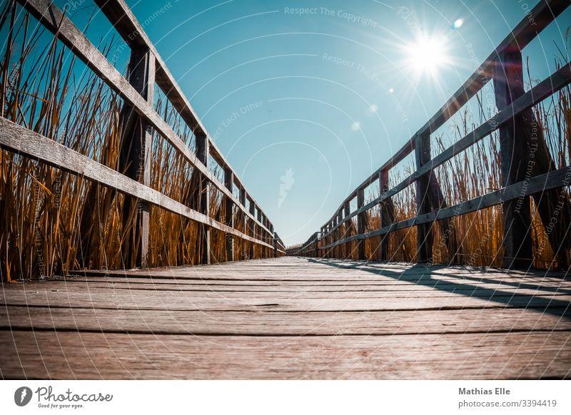 Holzsteg im Moor Steg Himmel Sonnenstrahlen Sonnenlicht Warm Heiß Holzmaserung Maserung Altes Holz Geländer Holzgeländer Schilf Sträucher Schilfrohr schilfhalm