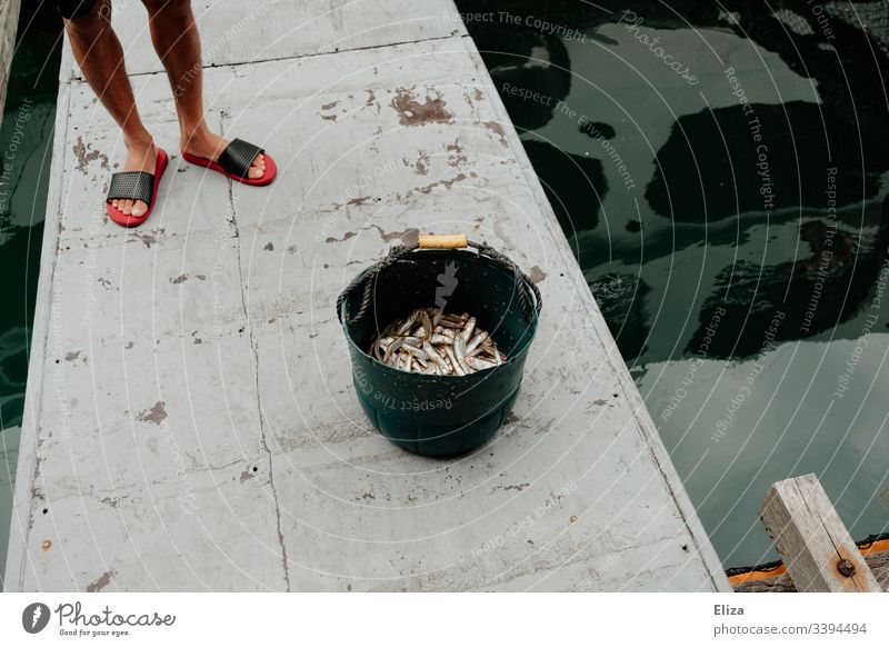 Die Beine eines Fischers neben einem Eimer voller gefangener Fische neben einem Wasserbecken auf einer Fischfarm in Vietnam fischen frisch Ernährung