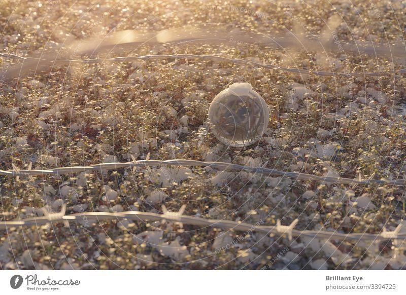 Glaskugel hinter einem Stacheldrahtzaun im Morgenlicht Schmelzen Frost gefroren frieren Zaun Feld Wiese Kristallkugel warm Wärme Schnee Sonnenlicht Gras spitz