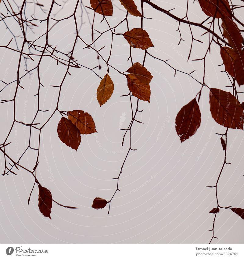 Baumäste und braune Blätter in der Natur in der Wintersaison Niederlassungen Blatt natürlich Laubwerk Saison abstrakt texturiert im Freien Hintergrund Schönheit
