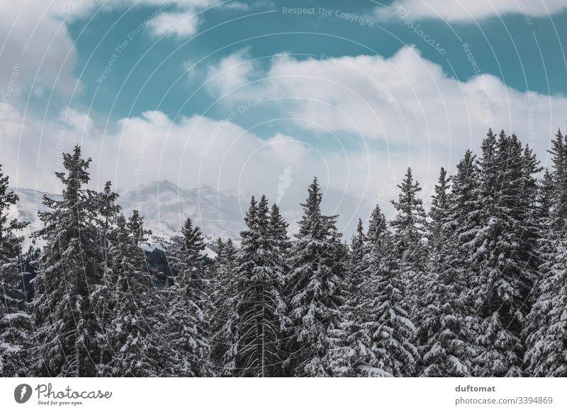Schneebedeckte Tannen vor Alpenpanorama Panorama Berge Skifahren Tal kalt Gebirge Winter Landschaft Ferien Urlaub Skipiste Himmel frisch Winterurlaub Aussicht